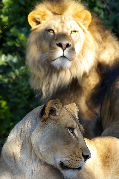 Lions-Ju7,01.jpg