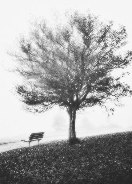 Foggy morning along Alki Beach