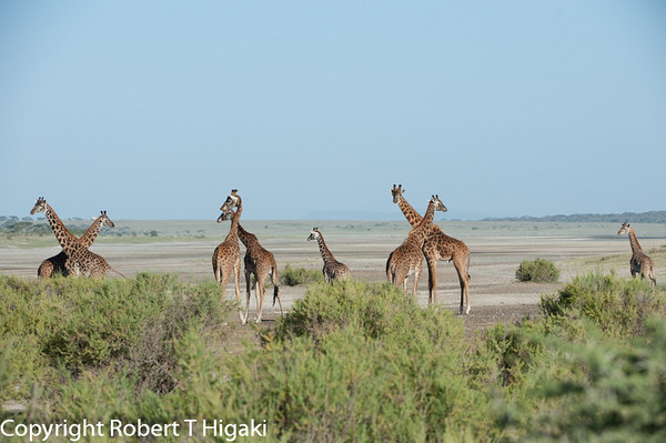 Tanzania-Ngorongoro Day 7