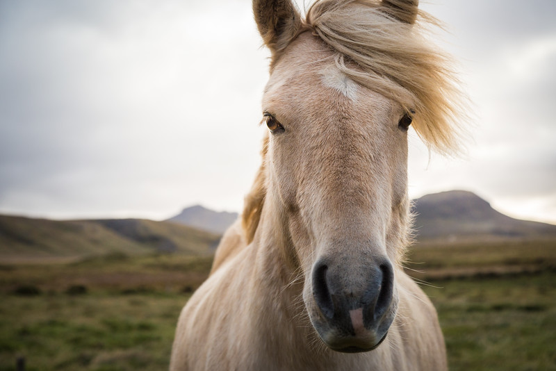 9766-Iceland-Paul-Hamill.jpg