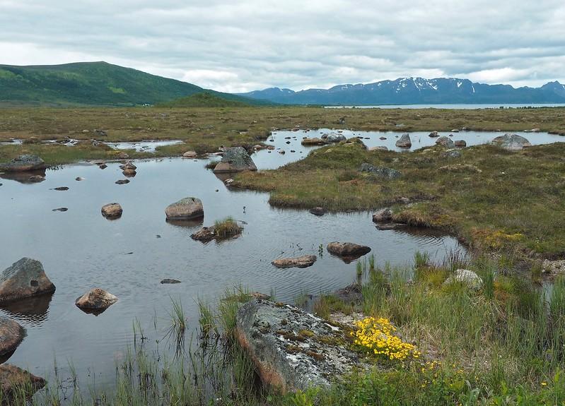 Forfjord 07-07-17 (5).jpg