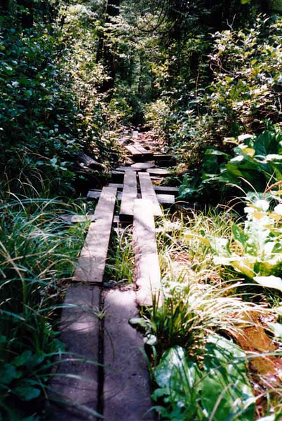 BOGWALKS This is what I was referring to back at the log bridge shot, although these are made out of milled planks. You make the rough-hewn ones way back in the backcountry where it's too far to haul materials. The idea's the same -- to get you across boggy areas.