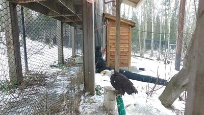 EAGLE INTRODUCTION PART 2