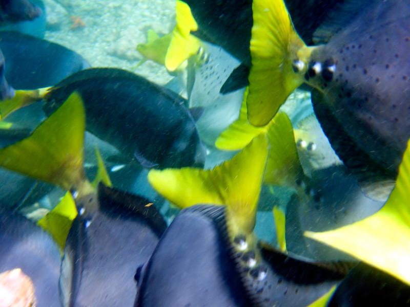 underwater-56.jpg