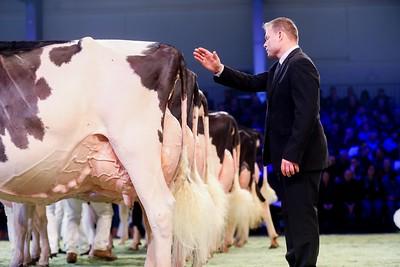 Swiss Expo Holstein Senior Cows 2019