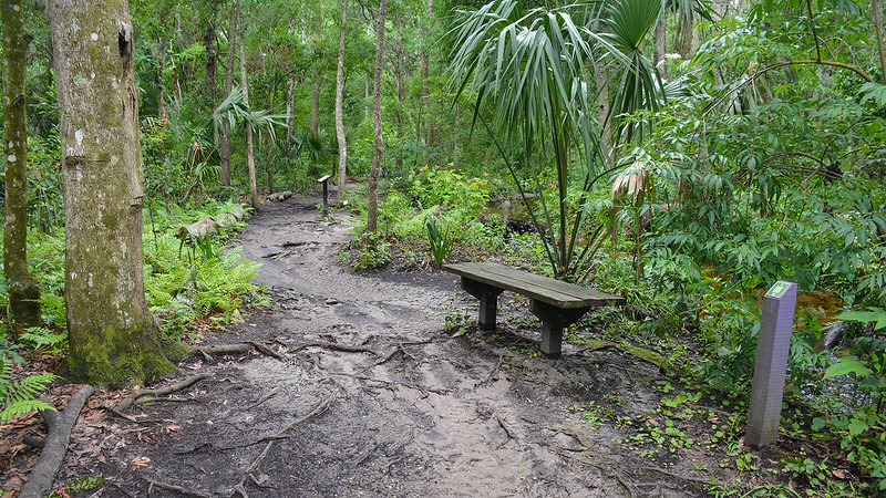 Soggy footpath with bench