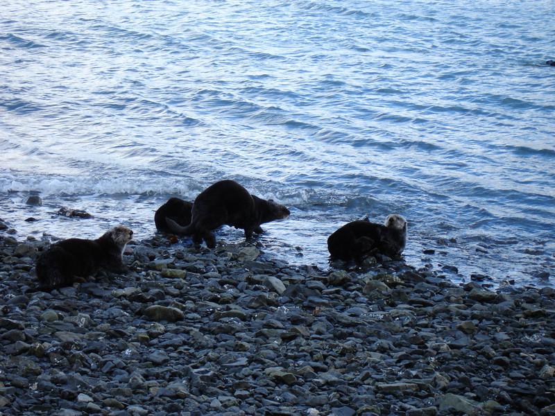 Alaska 2008 100.jpg