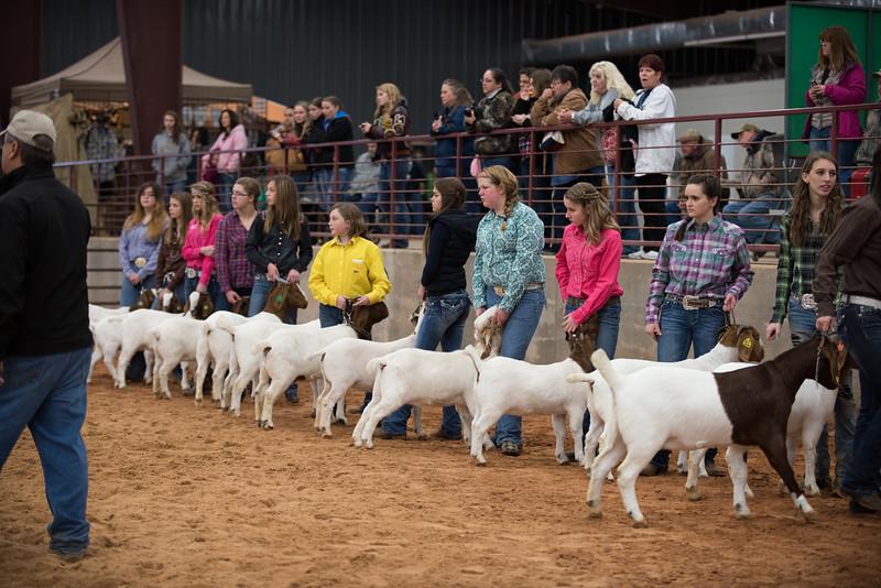 Hays_County_Show-0047.jpg