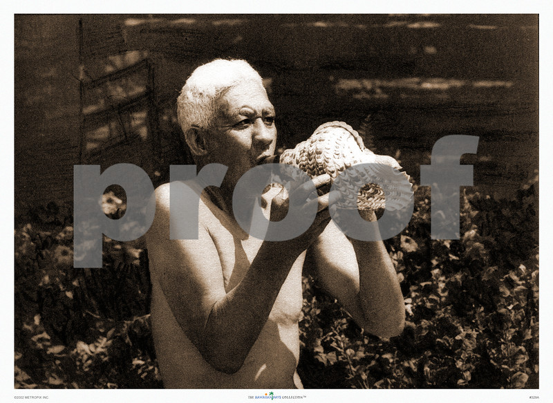 329: 'Old Man Blowing Conch Shell' From a sepia-toned photograph. Ca. 1926. (PROOF watermark will not appear on your print)