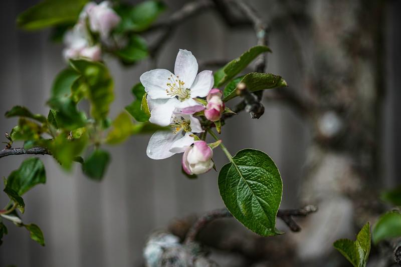 Arboretum nw1-16.JPG