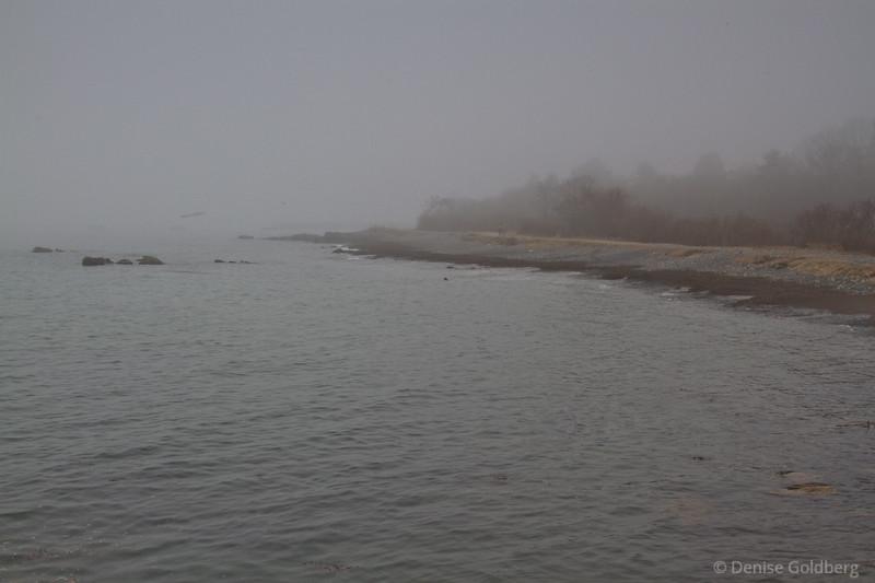 a coastline softened by fog