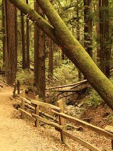 Redwood Park hike Aug 4th