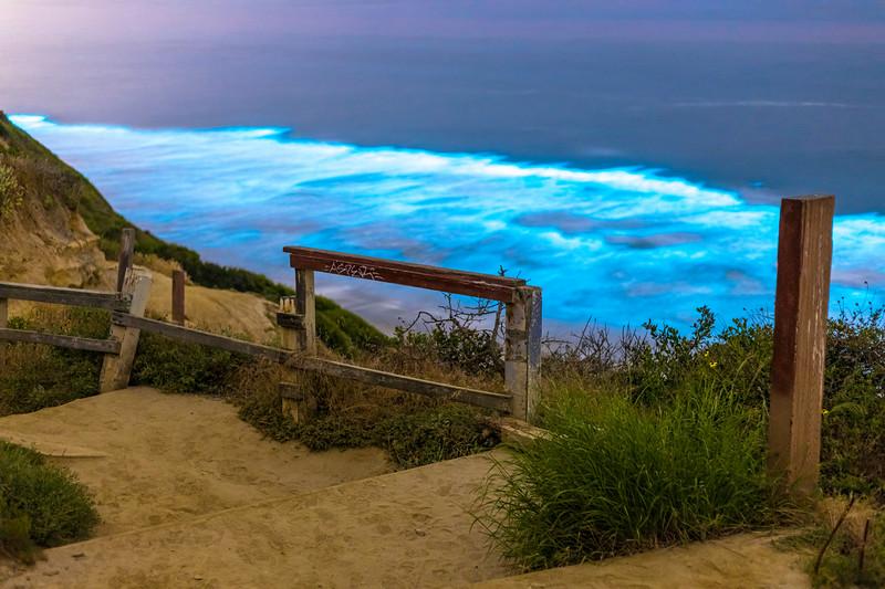 Black's Beach Bioluminescence.