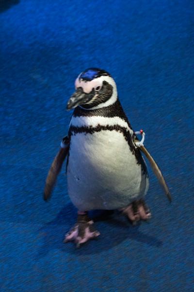 Aquarium of the Pacific 7/12/14