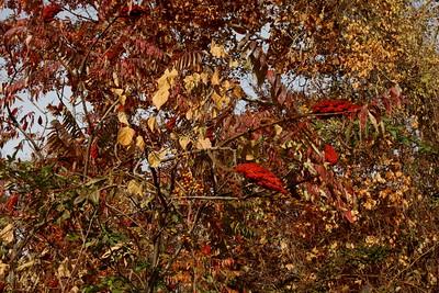 Autumn at Saulter's Pond  10-27-15