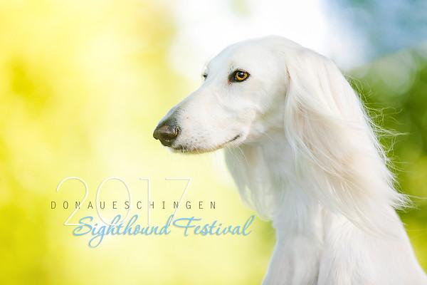 Donaueschingen Sighthound Festival 13/08/17