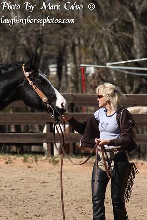 Start To Finish Performance Horses