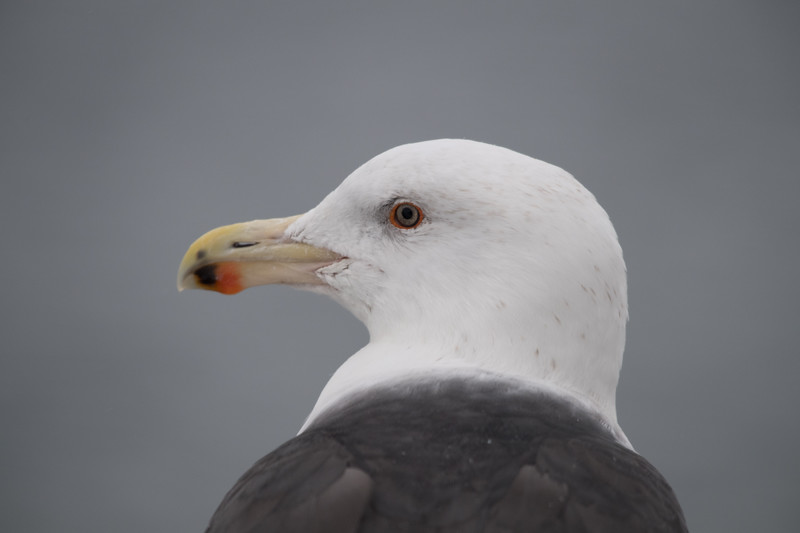 19-Sept North America Birds-5304.JPG