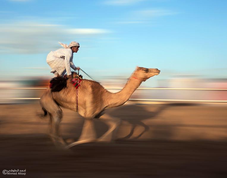 IMGL2717-2- Camel Race.jpg