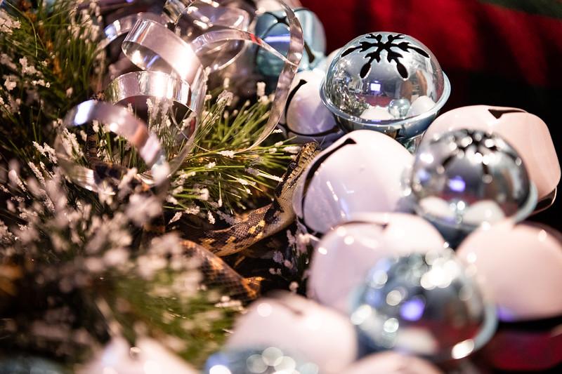 ChristmasSnakes19_0002.jpg