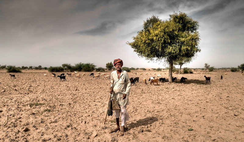 Farmer and his goats in the Thar desert.