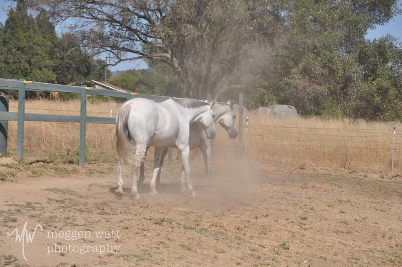 EB&Horses-098.jpg