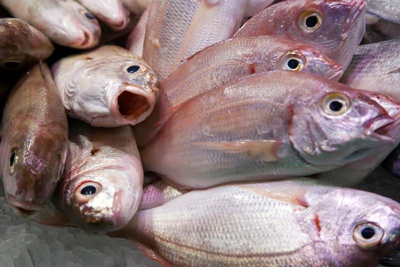 Fish, Boqueria market, town of Barcelona, autonomous commnunity of Catalonia, northeastern Spain