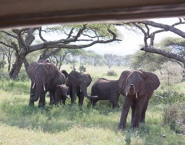 Tanzania March 2012