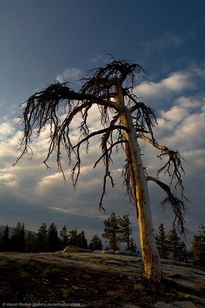 Dusk, Sequoia National Park