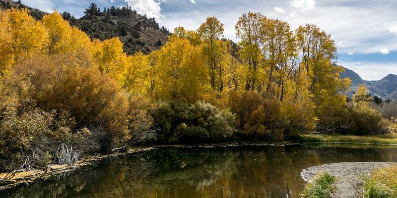 Eastern Sierra Fall Colors 2017