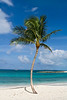 Beautiful palm tree on tropical beach with clear blue and green water.