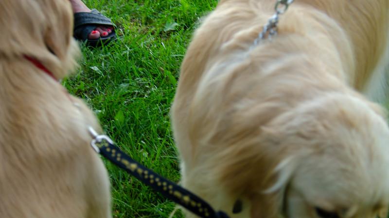 PuppyParty18-568.jpg