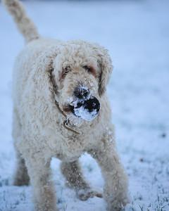 Maisy Snow 2019 Janu