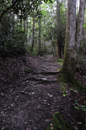 Lead Cove/Bote Mtn./Finley Cane Trails in a Loop Hike