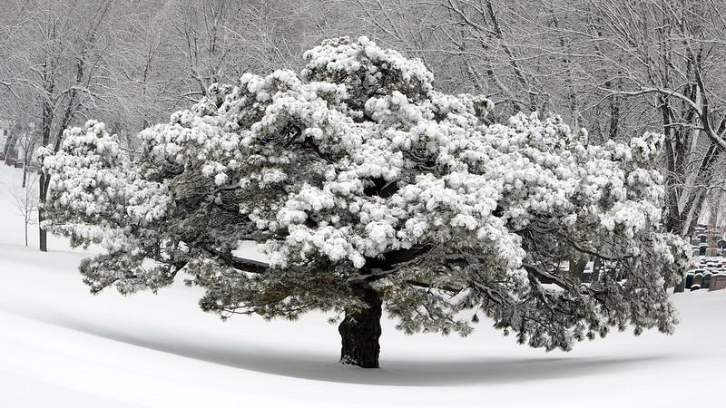 snowing-140202-dsc_0074.jpg