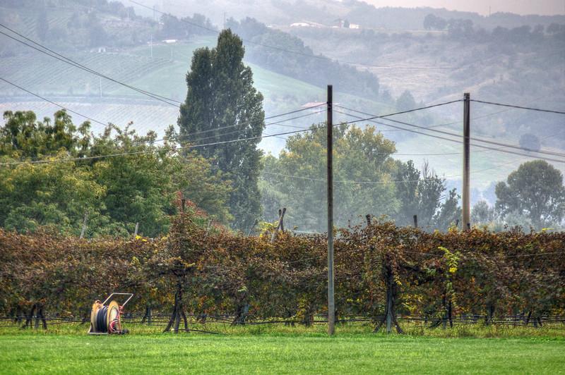 Fall... Again - Scandiano, Reggio Emilia, Italy - October 3, 2010