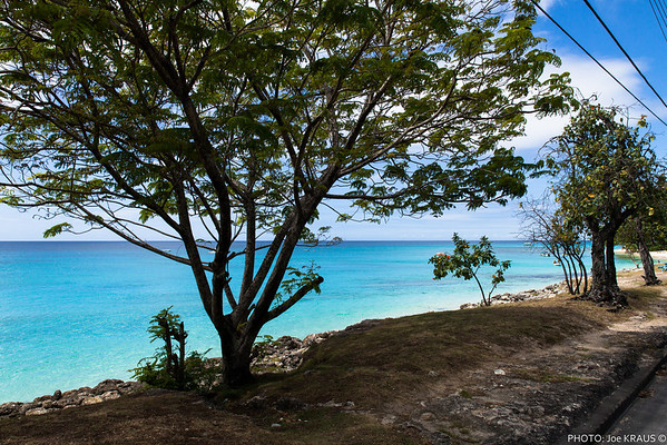 Barbados - Green Monkeys