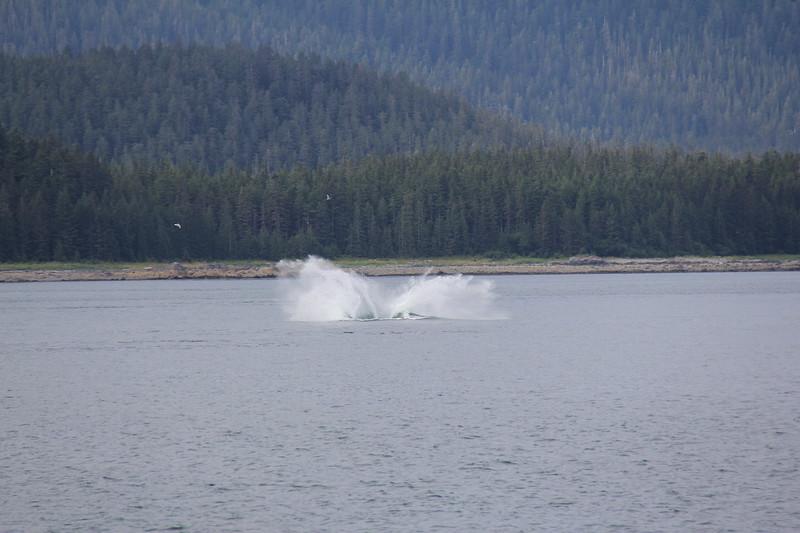 20160717-066 - WEX-Breaching Whale.JPG