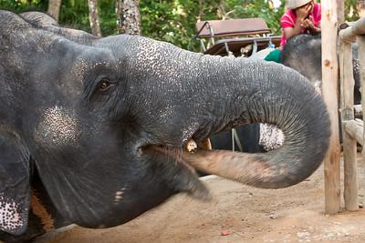 Thailand: Bangkok, Phuket, Ko Phi Phi