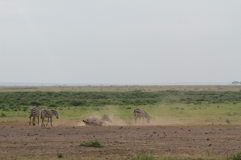 Kenya 2019 #2 711.JPG