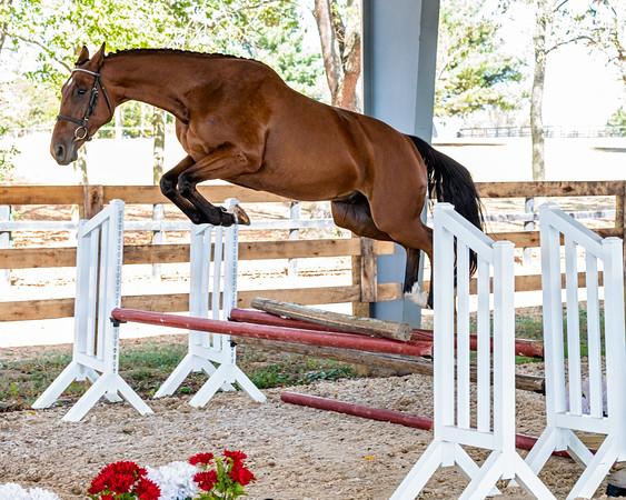 Horse 5 - Elissa Gibbs