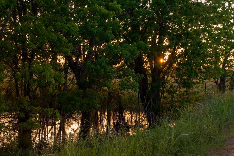 2016_4_9 Texas Wildflower Shoot-9007.jpg