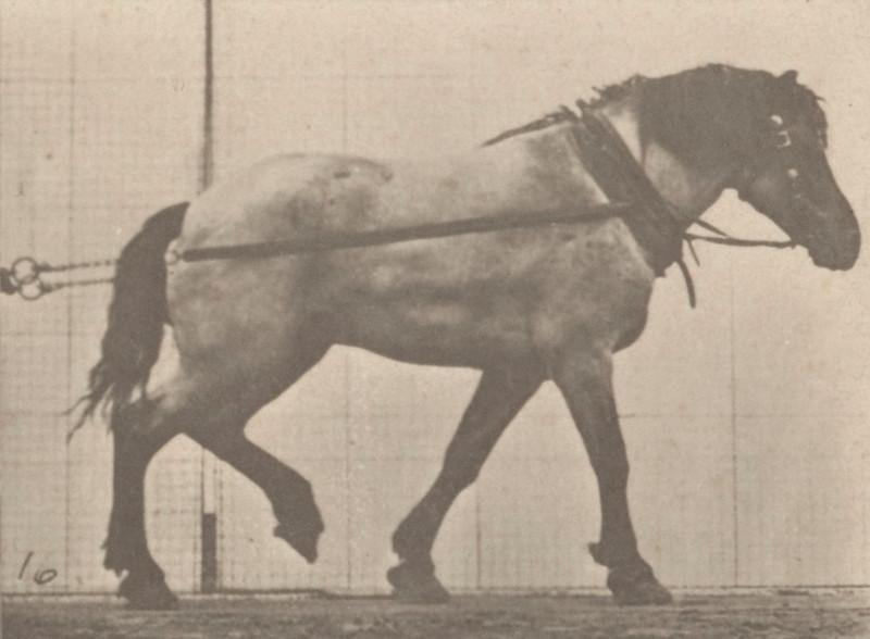 Horse Hansel hauling