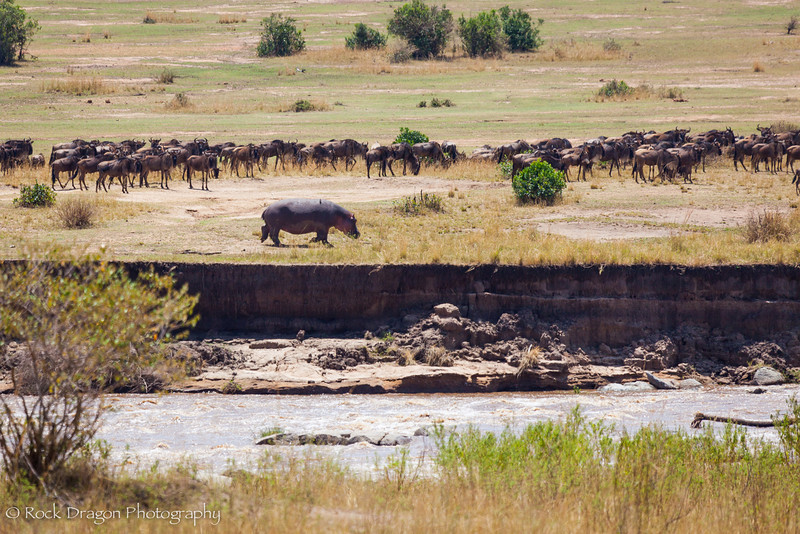 North_Serengeti-33.jpg