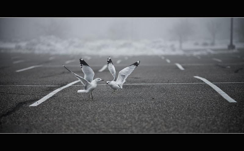 trashbirds.jpg
