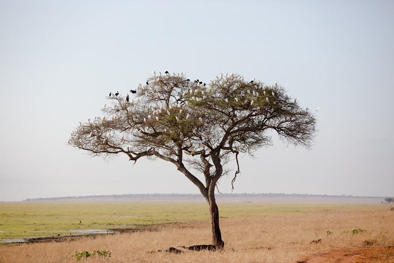 Africa - 102016 - 7833.jpg