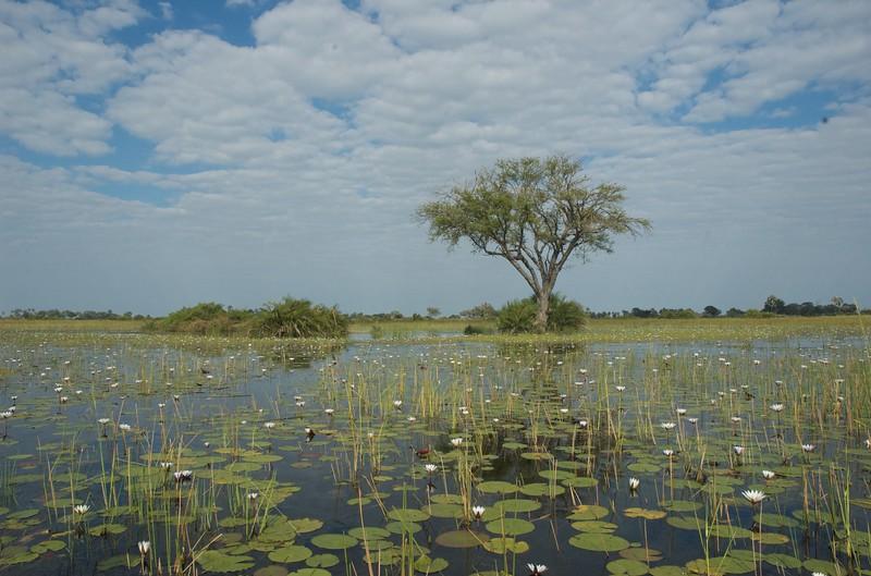 Okavango Memory - Leslie Rowley
