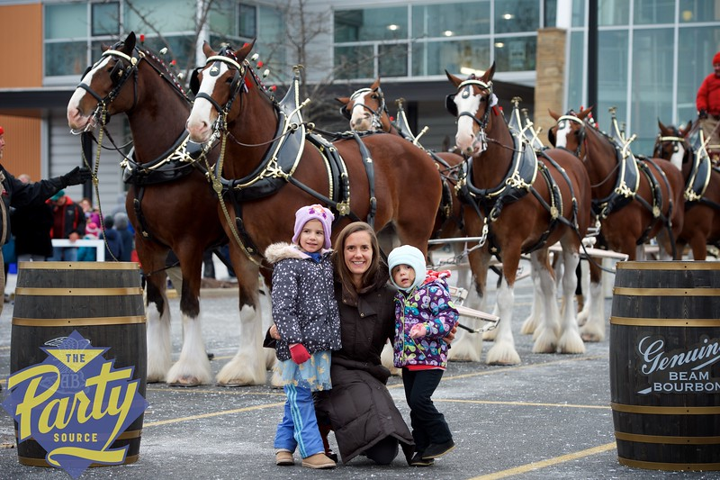 Clydesdale Portraits 26.jpg