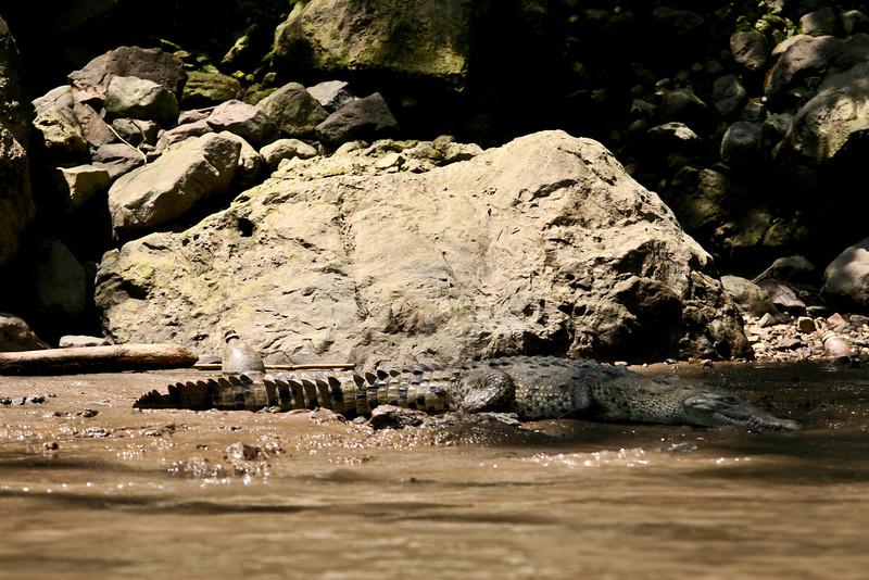 Crocodilo 30011.jpg