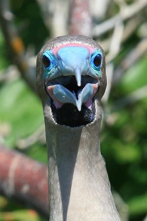 2011 Galapagos Islands